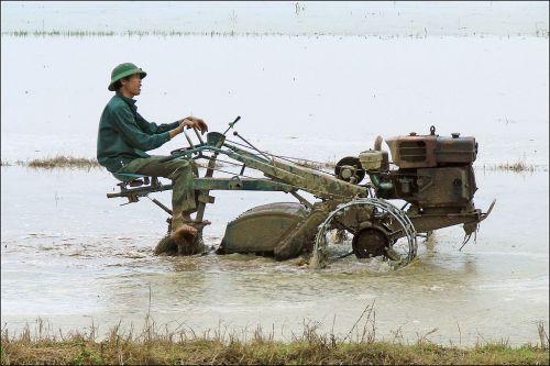 Labourage dans les rizières
