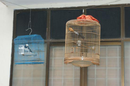 Les cages à oiseaux
