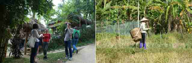 Des bananiers, des maisons enfouies dans la végétation