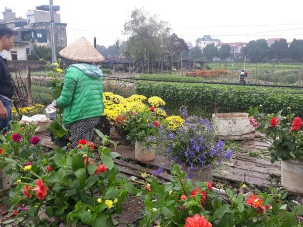 Marché aux fleurs typique de la période du Têt,  sous un ciel bien gris, comme souvent en janvier à Hanoï