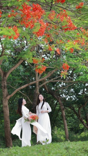 Les flamboyants sont en fleurs : c'est la saison des examens !  Romantisme à la vietnamienne