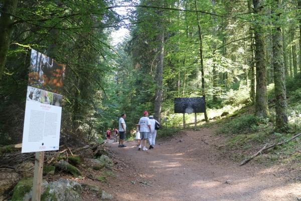 Dans la forêt vosgienne. Exposition de photos sur les animaux sauvages, le long d'un chemin de  randonnée de 4km. Petite rando comparée aux 18km parcourus à Bagas. Le record de Phuong !