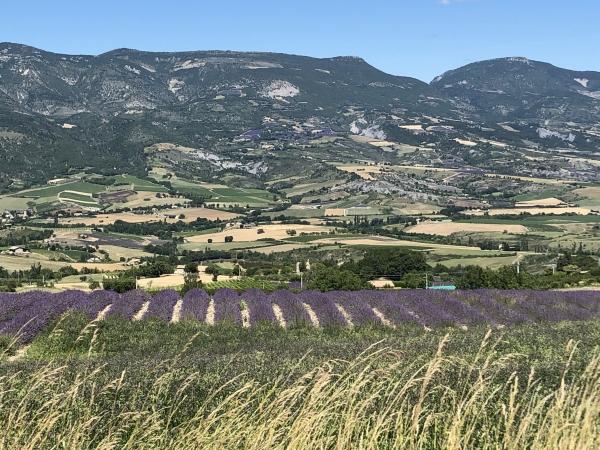 En Provence, à l'époque de la lavande en fleur